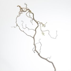 Corylus Hazelaar Tak 80cm x10  Boeketbinderij.be