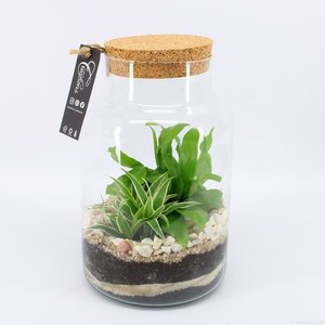 Varen in glas | DIY Terrarium()