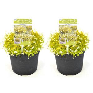 Duo Match & Moss 'Lime Green' ®()