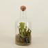 Terrarium met vleesetende plant en houden dopje - BOXplanten - Boeketbinderij.be_